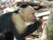 Foto Parque Nacional Cahuita