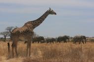 Foto Tanzània